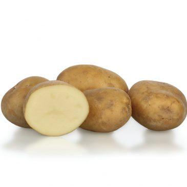 Kakšen krompir imamo, me je vprašal ….