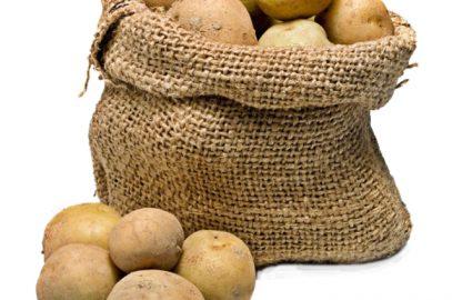Ekološka pridelava krompirja